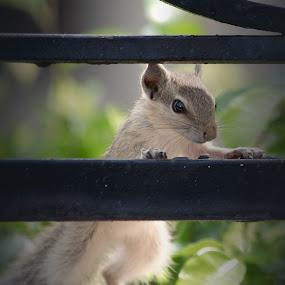Squirrel by Deepak Goswami - Animals Other Mammals (  )