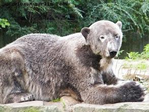 Photo: ... dann nimmt Knut wieder Platz...