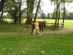Photo: C9120291 Janow Podlaski - powrot z pastwiska