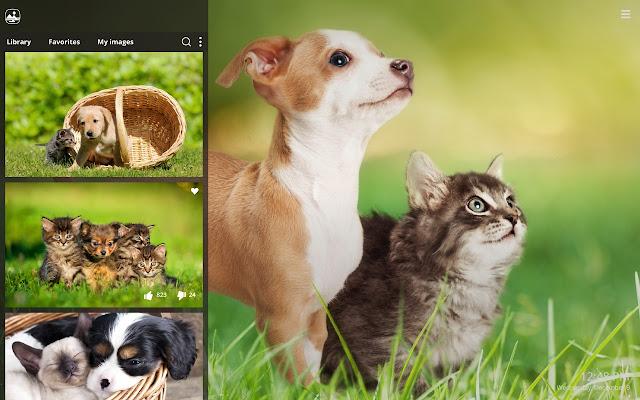 My Cats & Dogs Cute Cat Dog Kitten