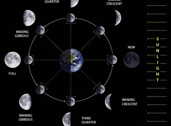 The moon is refered to in 4 major stages Waxing = growing larger  Full moon...