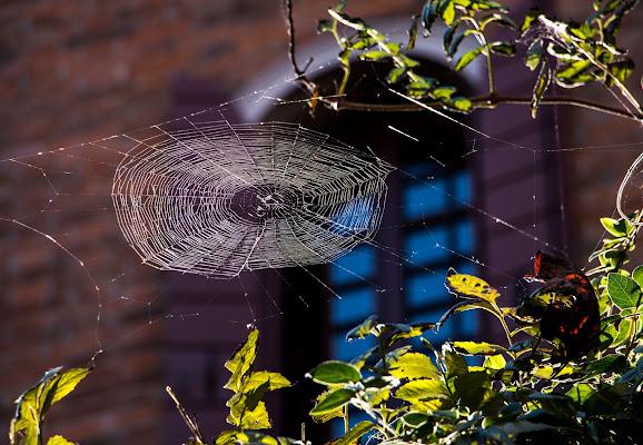Se cerchi il ragno di atlantex