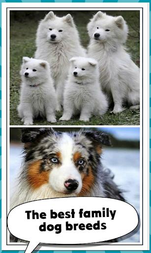 家族犬の品種