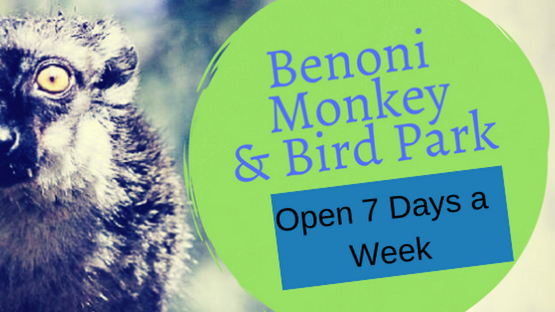 Image result for Benoni Monkey And Bird Park