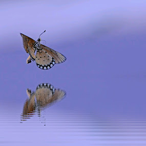 Silent morning... by Yoce Mocodompis - Animals Insects & Spiders (  )