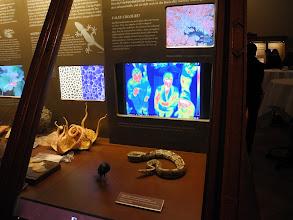 Photo: Visite du NHM, Musée d'Histoires Naturelles de Vienne.