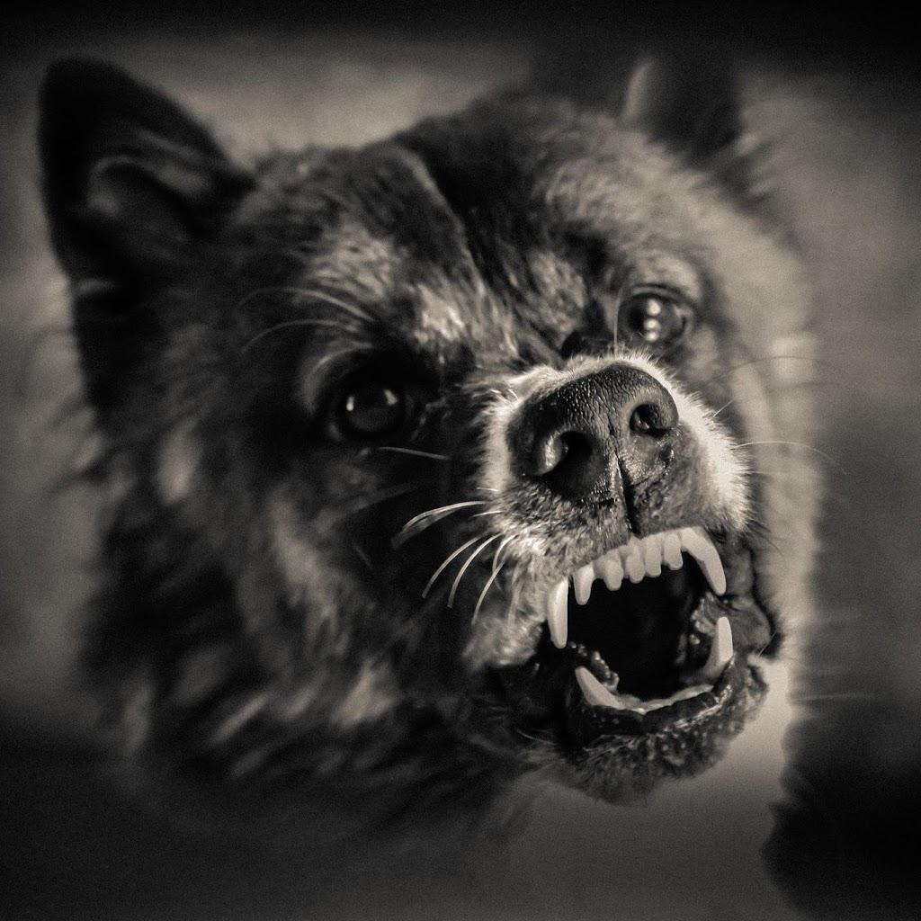 Dog Bite Victim