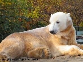 Photo: Nix entdeckt, Knut nimmt wieder gemuetlich Platz ;-)