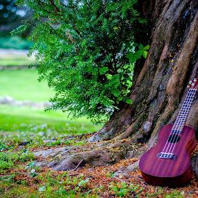 Makala Ukulele by Derek Robinson - Artistic Objects Musical Instruments ( ukulele makala instrument music )
