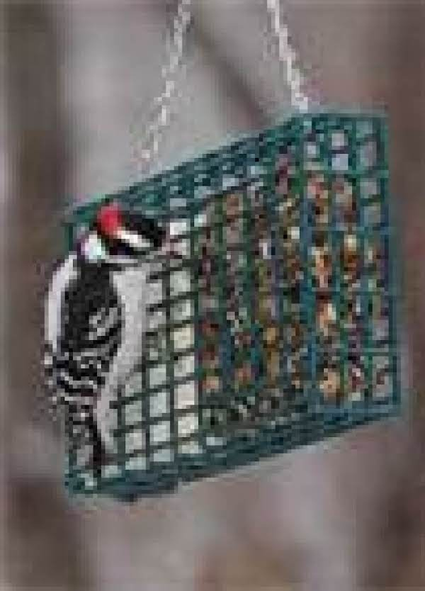 Winter Suet Recipe