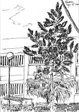 Photo: 庭園中的落羽松2010.09.15鋼筆 監獄庭園中種滿各式的花草樹木,乍看之下就像個小型的公園。 趁著午休,我站在中央走道畫起眼前的落羽松,幾個同事經過時探問著: 「你在幹嘛? 畫個哪像落羽松? 那張燙狗畫得不好,華爾滋比較好看。 這習慣不錯! 好醜喔! 你別這麼無聊吧!」 你們不明白,我只想用筆記下眼前心裡的感動,至於畫得像不像、好不好、別人怎麼說,其實我一點都不在乎…