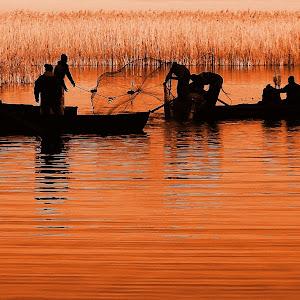 pescari 1 ORANGE.JPG