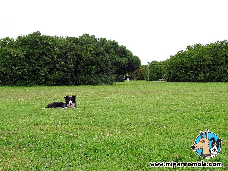 Senderismo con Perro, Parque El Rinconín en Gijón, Can de Palleiro y Border Collie