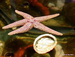 Photo: (Year 3) Day 23 - Star Fish