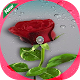 Panorama roses GIF for PC-Windows 7,8,10 and Mac