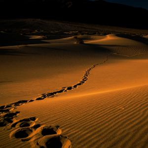 DV-Dunes_TB5A0979.jpg