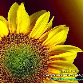 Yellow...  by Asif Bora - Typography Quotes & Sentences