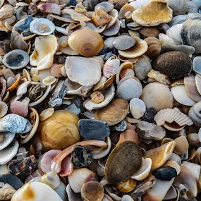 Conchas!!! by Eliseu Paes - Backgrounds Nature ( praia, shells, conchas, jurubatiba, beach )