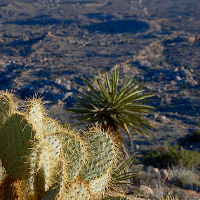 From Up Here by Savannah Eubanks - Landscapes Deserts ( mountain, cactus, yucca, prickly pear, desert, landscape )