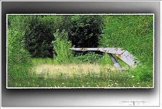 Foto: 2013 09 11 - P 205 B - ein Schildlein steht im Walde