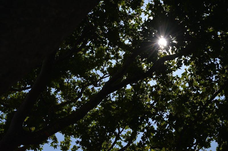 Una tenda di foglie  di SofiaDM