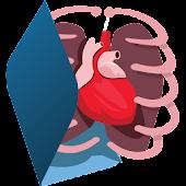 3D Human Body (anatomy)
