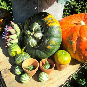 Autumn Harvest by Viive Selg - Food & Drink Fruits & Vegetables (  )