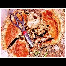 Photo: Thread & scissors on a stump #intercer #thread #stump #scissors - via Instagram, http://instagr.am/p/LkZlOPJfqQ/
