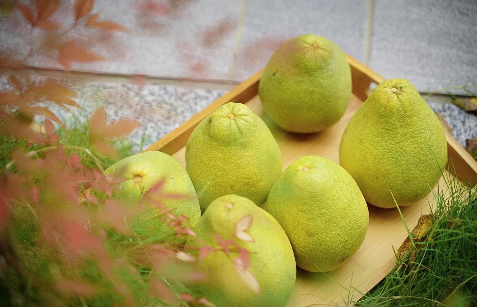 【開箱】蕙楓農場 /台南麻豆文旦/中秋送禮水果 老園 X 老欉    歲月淬煉出的美味