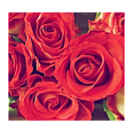 Awesome Flowers Wallpapers Icon