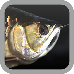 Android 3d Wallpaper 9apps Download Arowana Wallpaper Google Play Softwares