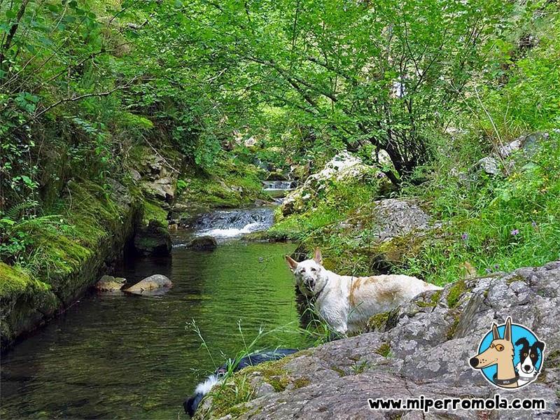 Can de Palleiro en el río Alba