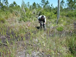 "Photo: Siggi filming the meanwhile extinct Sarracenia leucophylla ""pink tube"" at Tate's Hell (Florida Panhandle)."