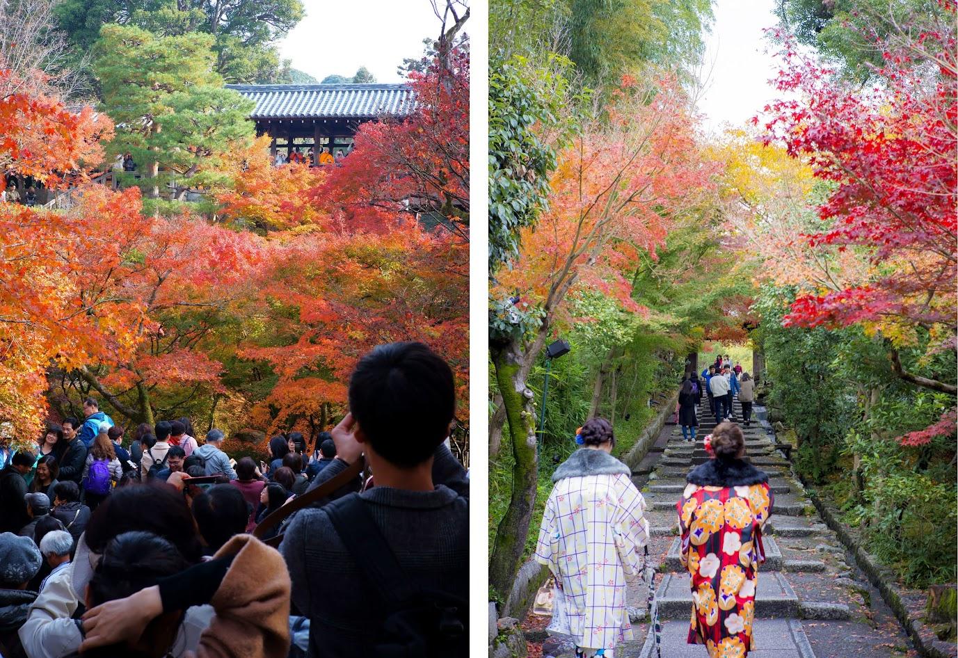 Lý do cho những chiếc lá mùa thu kỳ diệu ở Nhật Bản 5