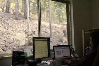 Photo: Andy's Office and Frequent Deer Company