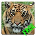 Free Tiger HD Live Wallpaper icon