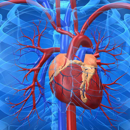 Cardiovascular System Apps No Google Play