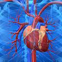 Cardiovascular System icon