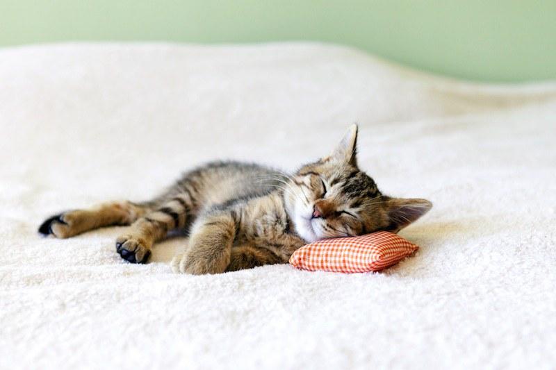 cat nap.jpg