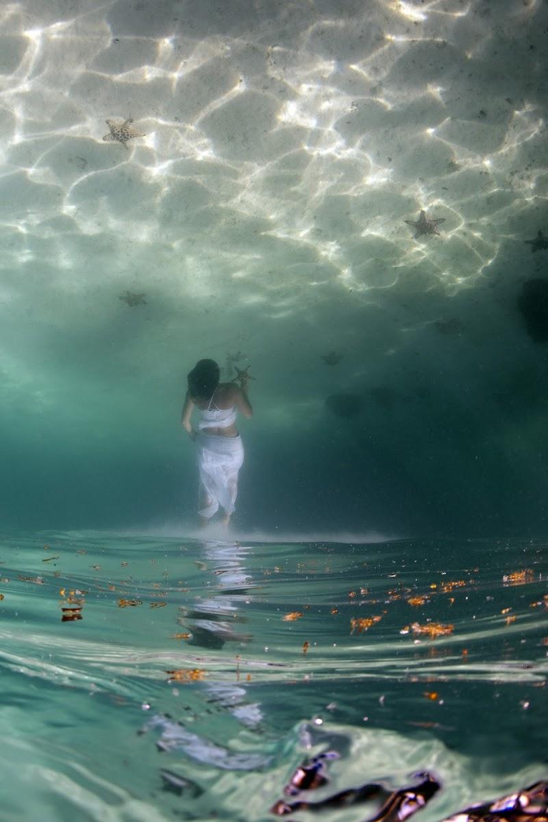 Up to the (sea) stars di Andrea Izzotti