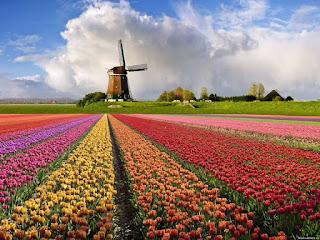 Велокруиз по Голландии