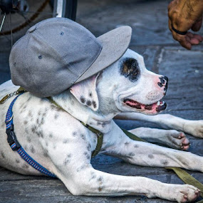 French Quarter Friend by Tony Richard - Animals - Dogs Portraits