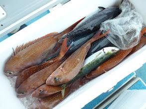 Photo: 真鯛も入って、大漁でした!