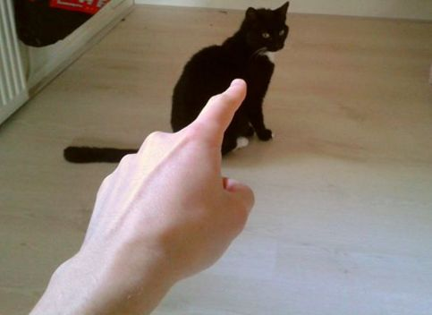 point at cat