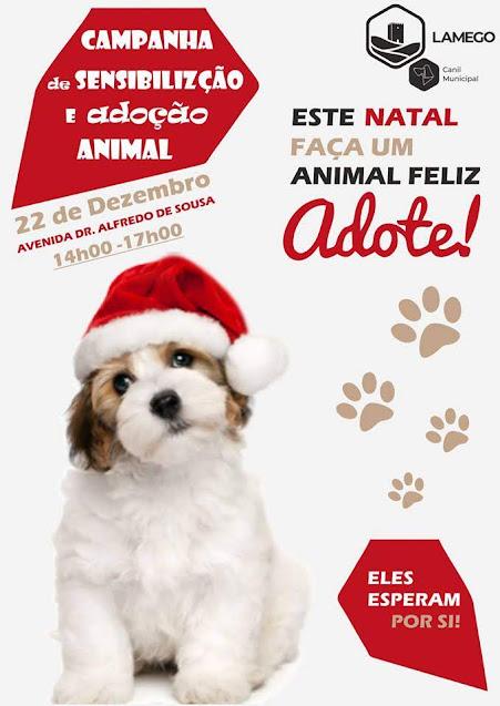 Canil de Lamego promove campanha de adoção neste Natal