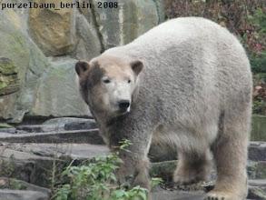 Photo: Und ueberhaupt muss Knut schauen...