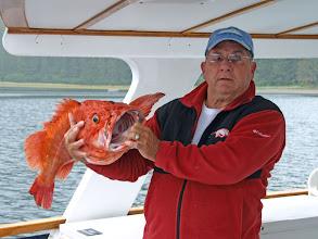 "Photo: 34"" Yellow Eye Rockfish (Red Snapper)"