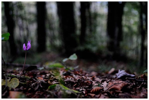 Fiore d'autunno  di alessandro_bello
