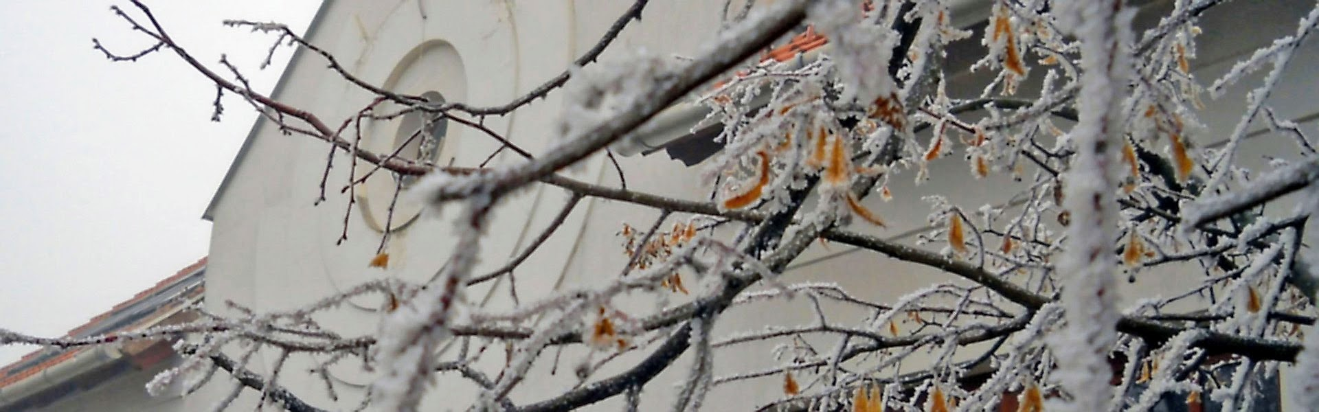 Téli faágak