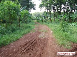 Photo: akses jalan yang menghubungkan Ds. Durenombo dengan Ds. Pecalungan yang terbengkalai